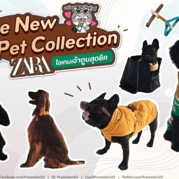 ใหม่!! Zara Pet Collection ไอเทมเจ้าตูบสุดชิค หนาวนี้คูลแน่~